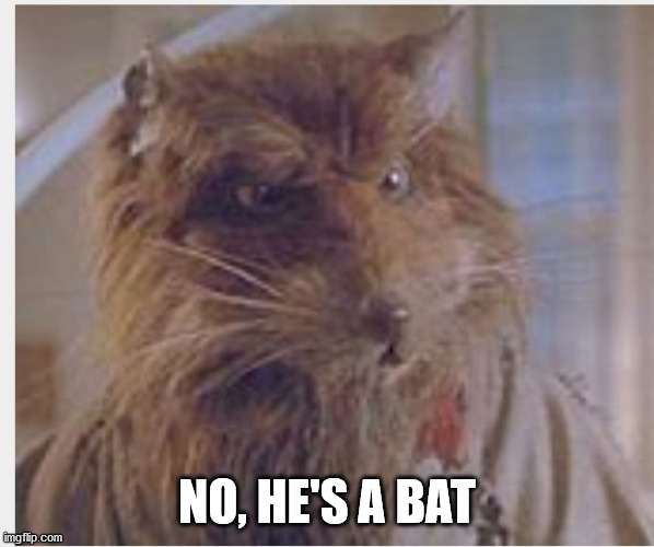 Master splinter | NO, HE'S A BAT | image tagged in master splinter | made w/ Imgflip meme maker