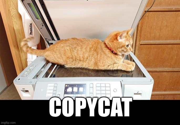 We named him Xerox |  COPYCAT | image tagged in funny memes,funny cat memes,funny,cats | made w/ Imgflip meme maker