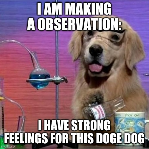I Have No Idea What I Am Doing Dog Meme | I AM MAKING A OBSERVATION: I HAVE STRONG FEELINGS FOR THIS DOGE DOG | image tagged in memes,i have no idea what i am doing dog | made w/ Imgflip meme maker