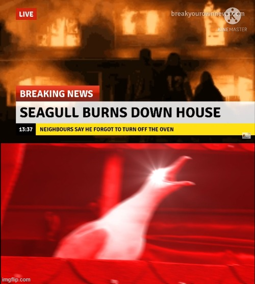 Based Off Of a Video Courtesy of DJ.Corviknight | image tagged in memes,inhaling seagull,breaking news,burning,house,seagull | made w/ Imgflip meme maker
