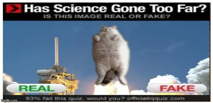 rocket cat | image tagged in funny cats | made w/ Imgflip meme maker