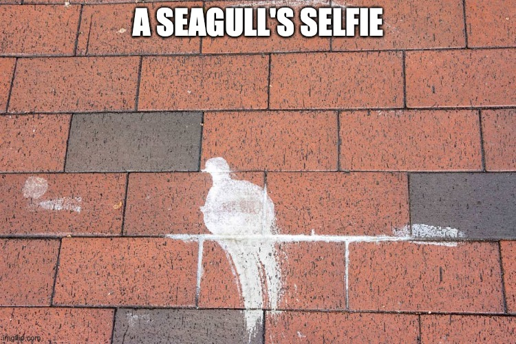 a seagull's selfie |  A SEAGULL'S SELFIE | image tagged in seagull,selfie,pavement | made w/ Imgflip meme maker