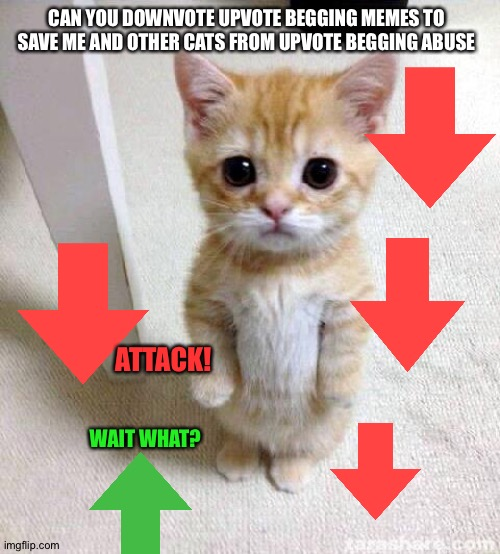 Got no clue what I did with dis meme |  CAN YOU DOWNVOTE UPVOTE BEGGING MEMES TO SAVE ME AND OTHER CATS FROM UPVOTE BEGGING ABUSE; ATTACK! WAIT WHAT? | image tagged in memes,cute cat | made w/ Imgflip meme maker