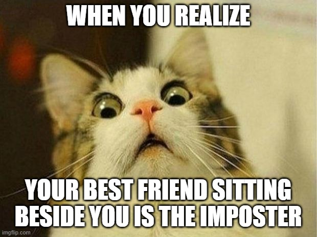 Scared Cat Meme |  WHEN YOU REALIZE; YOUR BEST FRIEND SITTING BESIDE YOU IS THE IMPOSTER | image tagged in memes,scared cat | made w/ Imgflip meme maker