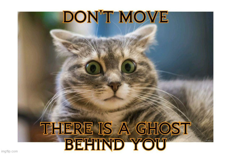 image tagged in cat,scared cat,holloween,ghost,funny | made w/ Imgflip meme maker