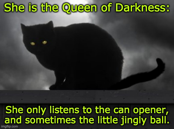 Cat of darkness |  She is the Queen of Darkness:; She only listens to the can opener, and sometimes the little jingly ball. | image tagged in cat,black cat | made w/ Imgflip meme maker
