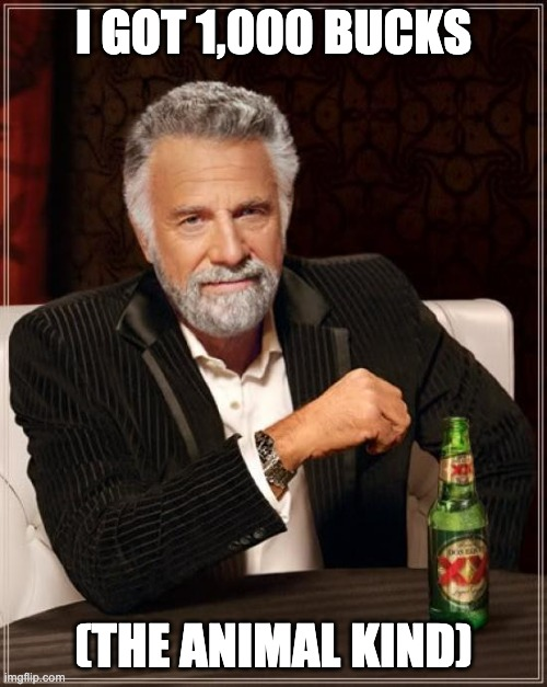 I'm very interesting ? |  I GOT 1,000 BUCKS; (THE ANIMAL KIND) | image tagged in memes,the most interesting man in the world | made w/ Imgflip meme maker