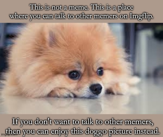 Well, what are you waiting for? Pick one! |  This is not a meme. This is a place where you can talk to other memers on Imgflip. If you don't want to talk to other memers, then you can enjoy this doggo picture instead. | image tagged in doggo,non-meme | made w/ Imgflip meme maker