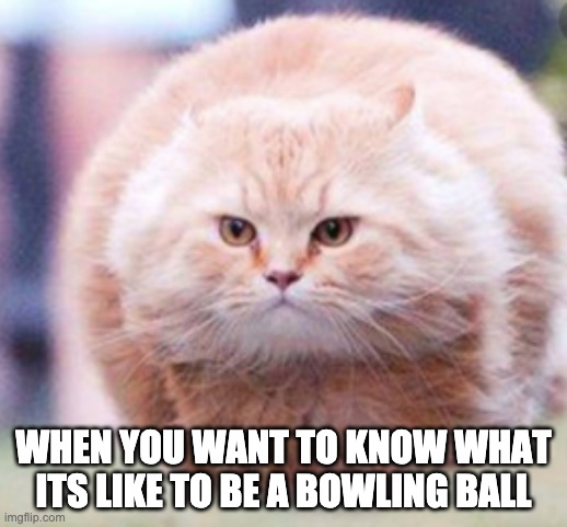 WHEN YOU WANT TO KNOW WHAT ITS LIKE TO BE A BOWLING BALL | image tagged in cats,funny,bowling | made w/ Imgflip meme maker