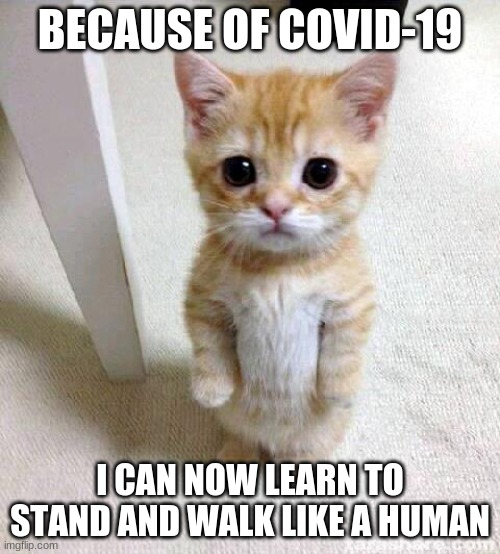 Cute Cat |  BECAUSE OF COVID-19; I CAN NOW LEARN TO STAND AND WALK LIKE A HUMAN | image tagged in memes,cute cat | made w/ Imgflip meme maker