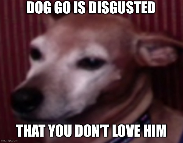 Love him |  DOG GO IS DISGUSTED; THAT YOU DON'T LOVE HIM | image tagged in doggo | made w/ Imgflip meme maker