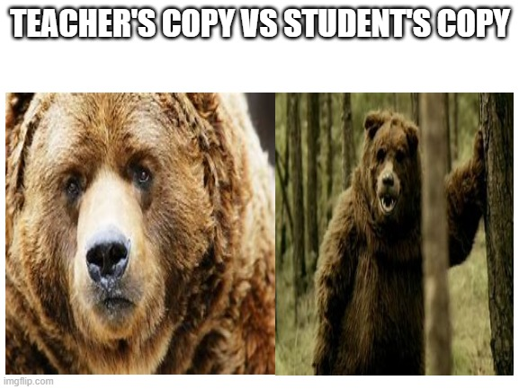 Winnie the what the heck? |  TEACHER'S COPY VS STUDENT'S COPY | image tagged in bear | made w/ Imgflip meme maker