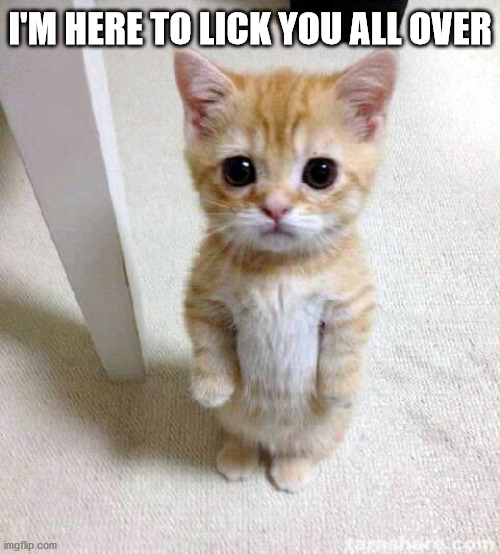 Cute Cat |  I'M HERE TO LICK YOU ALL OVER | image tagged in memes,cute cat | made w/ Imgflip meme maker