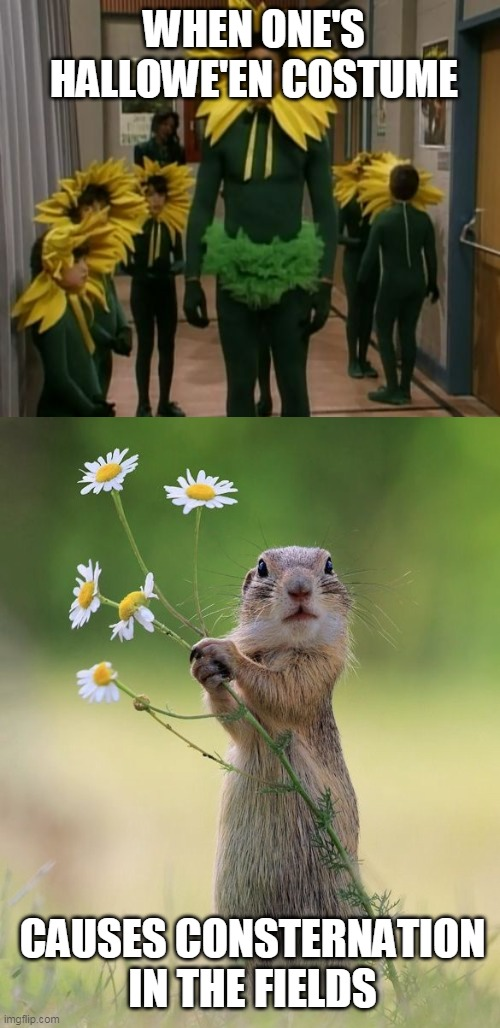 Hallowe'en Costume |  WHEN ONE'S HALLOWE'EN COSTUME; CAUSES CONSTERNATION IN THE FIELDS | image tagged in flower squirrel,shocked face,squirrel,halloween costume,memes | made w/ Imgflip meme maker