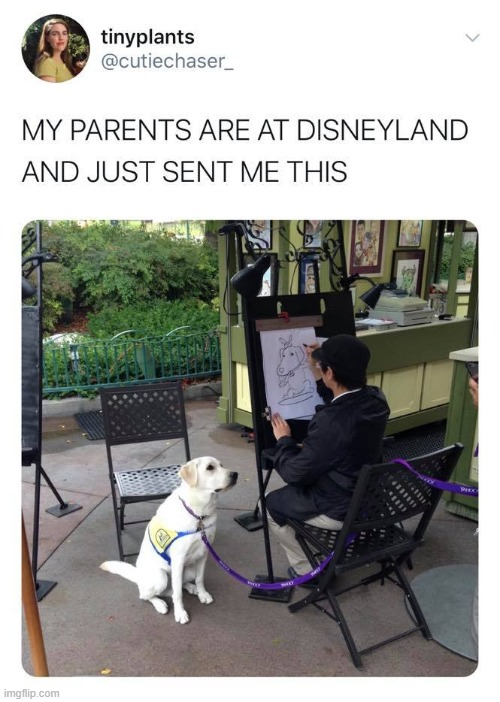 Wholesome Repost of the Day | image tagged in wholesome,repost,photo of the day,dog,dogs,disneyland | made w/ Imgflip meme maker