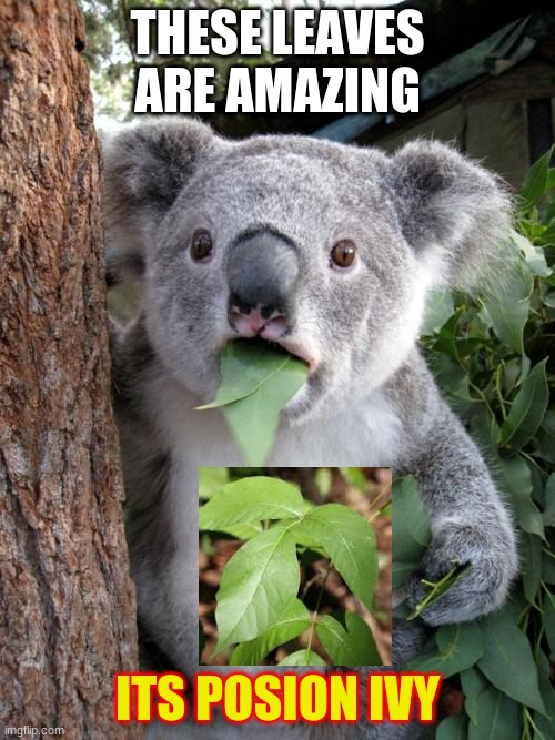 cowala |  THESE LEAVES ARE AMAZING; ITS POSION IVY | image tagged in memes,surprised koala,poision ivy | made w/ Imgflip meme maker