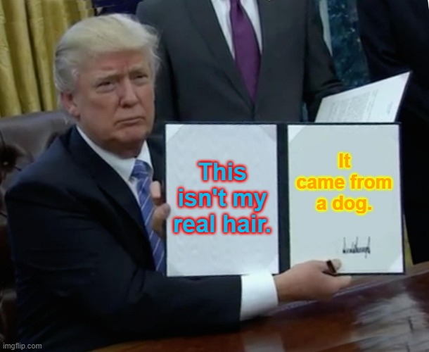 Trump Bill Signing |  This isn't my real hair. It came from a dog. | image tagged in memes,trump bill signing | made w/ Imgflip meme maker