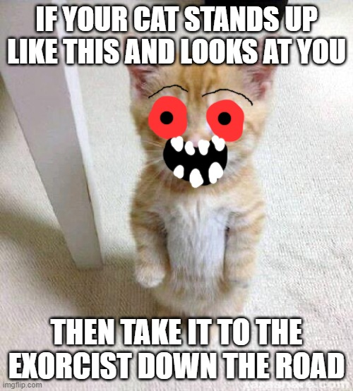 The Cat With Creepy Eyes |  IF YOUR CAT STANDS UP LIKE THIS AND LOOKS AT YOU; THEN TAKE IT TO THE EXORCIST DOWN THE ROAD | image tagged in memes,cute cat | made w/ Imgflip meme maker