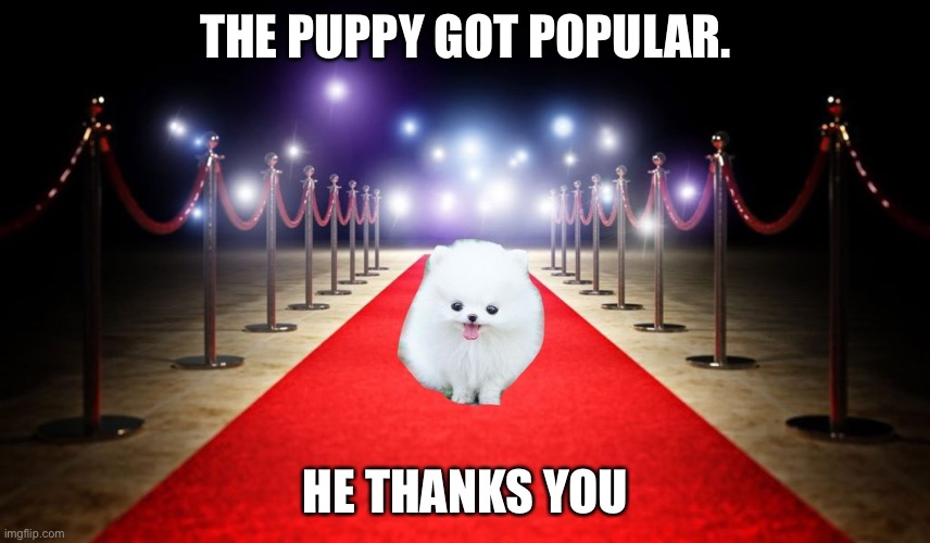 The puppy is flooooofy |  THE PUPPY GOT POPULAR. HE THANKS YOU | image tagged in puppy week,aww,sequel | made w/ Imgflip meme maker