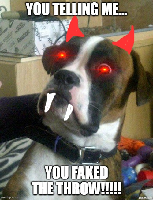 Funny Dog |  YOU TELLING ME... YOU FAKED THE THROW!!!!! | image tagged in funny dog | made w/ Imgflip meme maker