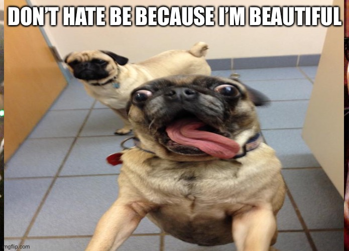 Pug love |  DON'T HATE BE BECAUSE I'M BEAUTIFUL | image tagged in dog | made w/ Imgflip meme maker