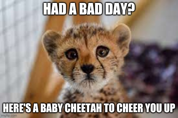 your welcome |  HAD A BAD DAY? HERE'S A BABY CHEETAH TO CHEER YOU UP | image tagged in cute cat | made w/ Imgflip meme maker