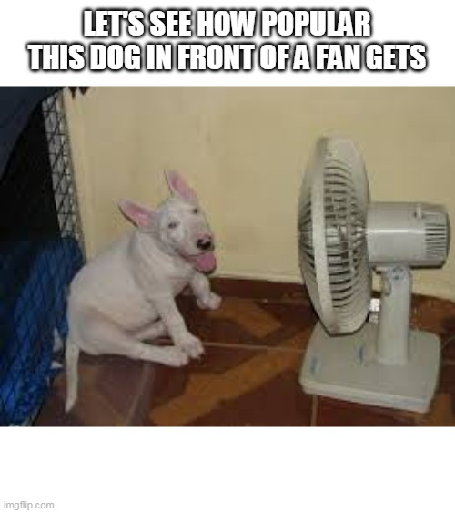 cute |  LET'S SEE HOW POPULAR THIS DOG IN FRONT OF A FAN GETS | image tagged in dog,fan | made w/ Imgflip meme maker