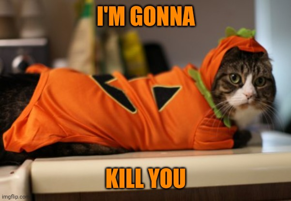 BUT HE'S SUCH A CUTE PUMPKIN |  I'M GONNA; KILL YOU | image tagged in pumpkin,cats,funny cats,halloween | made w/ Imgflip meme maker