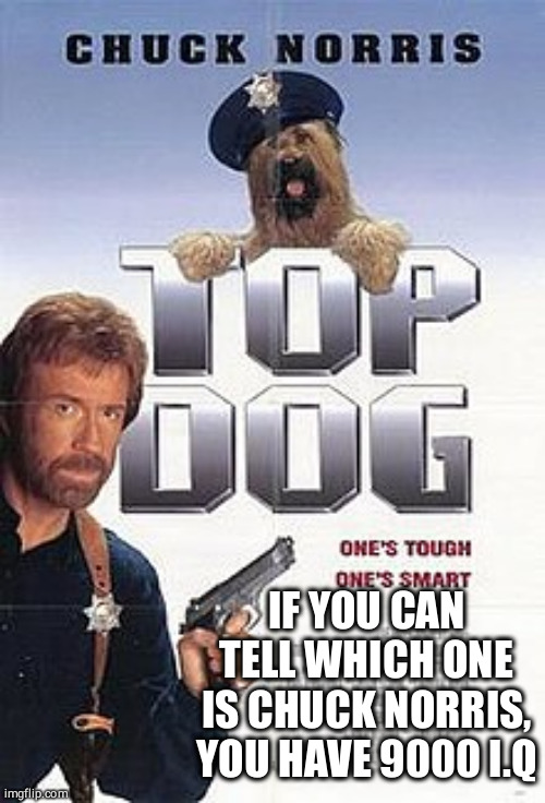 Can you spot Chuck Norris |  IF YOU CAN TELL WHICH ONE IS CHUCK NORRIS, YOU HAVE 9000 I.Q | image tagged in chuck norris,funny,dog | made w/ Imgflip meme maker