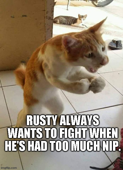 Too Much Nip |  RUSTY ALWAYS WANTS TO FIGHT WHEN HE'S HAD TOO MUCH NIP. | image tagged in cats,catnip | made w/ Imgflip meme maker