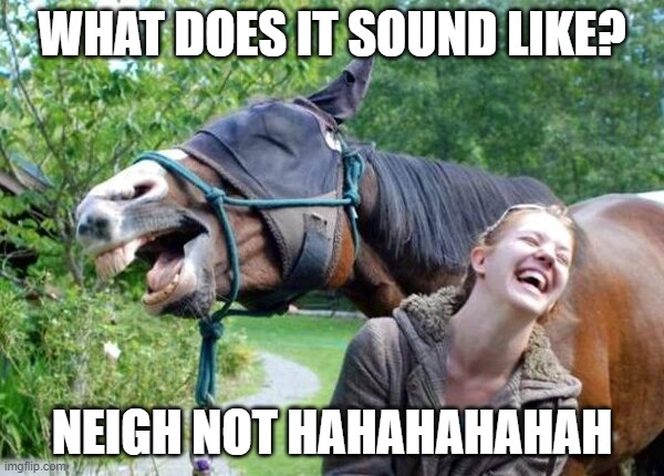 haha sound |  WHAT DOES IT SOUND LIKE? NEIGH NOT HAHAHAHAHAH | image tagged in laughing horse | made w/ Imgflip meme maker