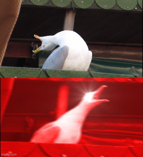 Screaming bird | image tagged in screaming bird | made w/ Imgflip meme maker