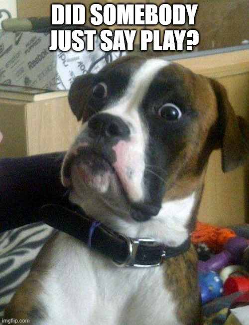 Blankie the Shocked Dog | DID SOMEBODY JUST SAY PLAY? | image tagged in blankie the shocked dog | made w/ Imgflip meme maker