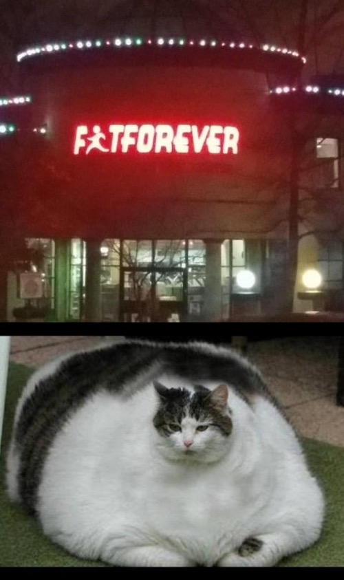 We are fat forever | image tagged in fat cat 2 | made w/ Imgflip meme maker