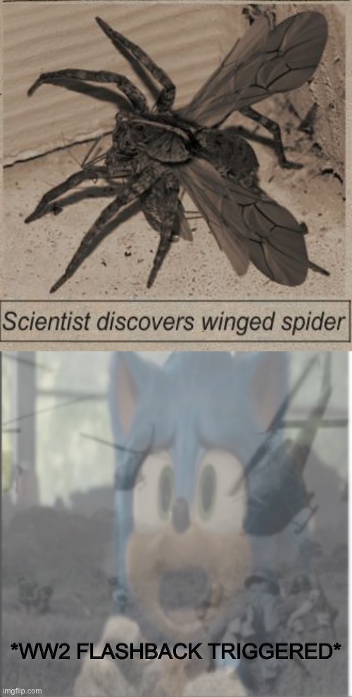Dank memes |  *WW2 FLASHBACK TRIGGERED* | image tagged in dank memes,funny memes,memes,sonic the hedgehog,ww2,spider | made w/ Imgflip meme maker