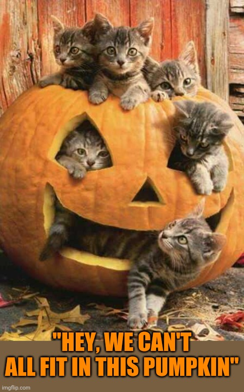 "SO THAT'S WHAT'S ON THE INSIDE OF A PUMPKIN |  ""HEY, WE CAN'T ALL FIT IN THIS PUMPKIN"" 
