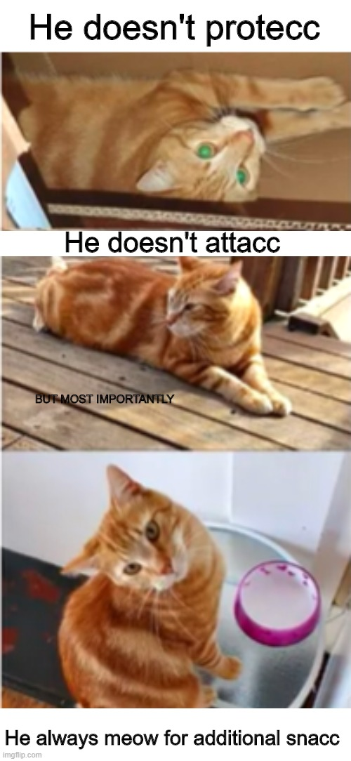 The cat |  He doesn't protecc; He doesn't attacc; BUT MOST IMPORTANTLY; He always meow for additional snacc | image tagged in memes,cats | made w/ Imgflip meme maker