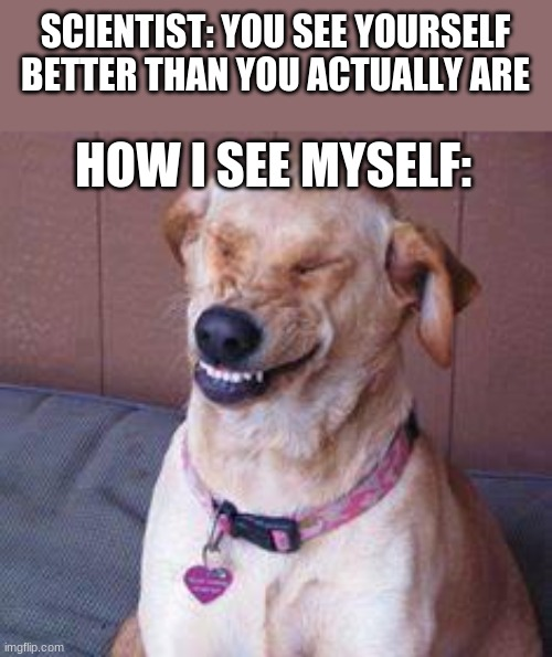 funny dog |  SCIENTIST: YOU SEE YOURSELF BETTER THAN YOU ACTUALLY ARE; HOW I SEE MYSELF: | image tagged in funny dog | made w/ Imgflip meme maker
