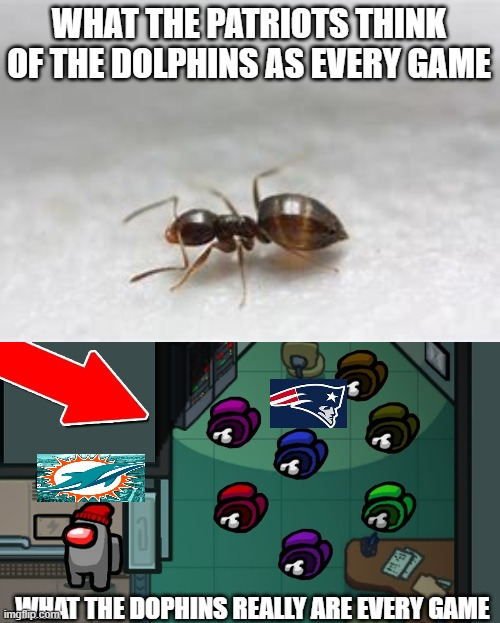 Dolphins rule |  WHAT THE PATRIOTS THINK OF THE DOLPHINS AS EVERY GAME; WHAT THE DOPHINS REALLY ARE EVERY GAME | image tagged in among us,nfl | made w/ Imgflip meme maker