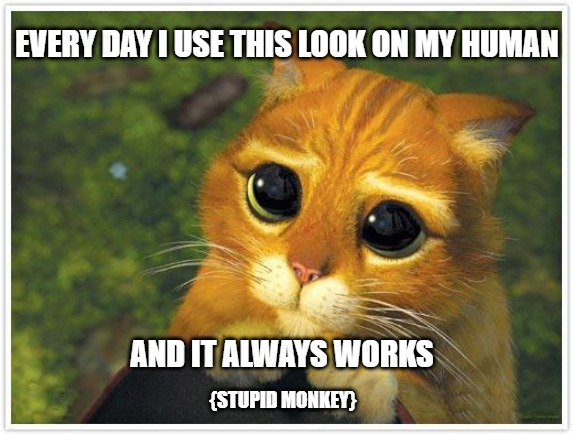 Shrek Cat Meme |  EVERY DAY I USE THIS LOOK ON MY HUMAN; AND IT ALWAYS WORKS; {STUPID MONKEY} | image tagged in memes,shrek cat | made w/ Imgflip meme maker