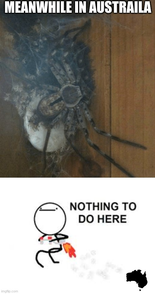 MEANWHILE IN AUSTRAILA | image tagged in memes,nothing to do here,spider,meanwhile in australia | made w/ Imgflip meme maker