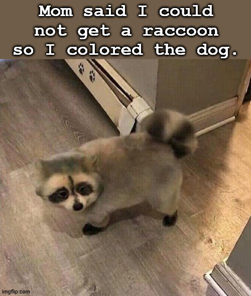 There is a way |  Mom said I could not get a raccoon so I colored the dog. | image tagged in raccoon | made w/ Imgflip meme maker