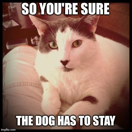 The cat with a question | SO YOU'RE SURE THE DOG HAS TO STAY | image tagged in funny,cats,animals | made w/ Imgflip meme maker