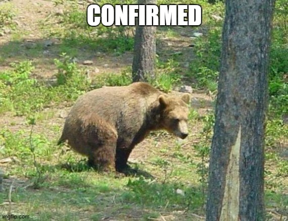 I guess that, settles that. |  CONFIRMED | image tagged in random,bear,woods,outdoors,forest,silly question | made w/ Imgflip meme maker