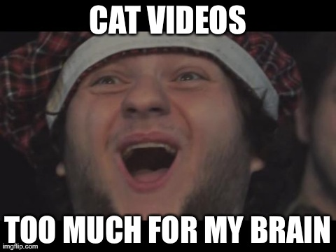 CAT VIDEOS TOO MUCH FOR MY BRAIN | image tagged in funny,internet | made w/ Imgflip meme maker