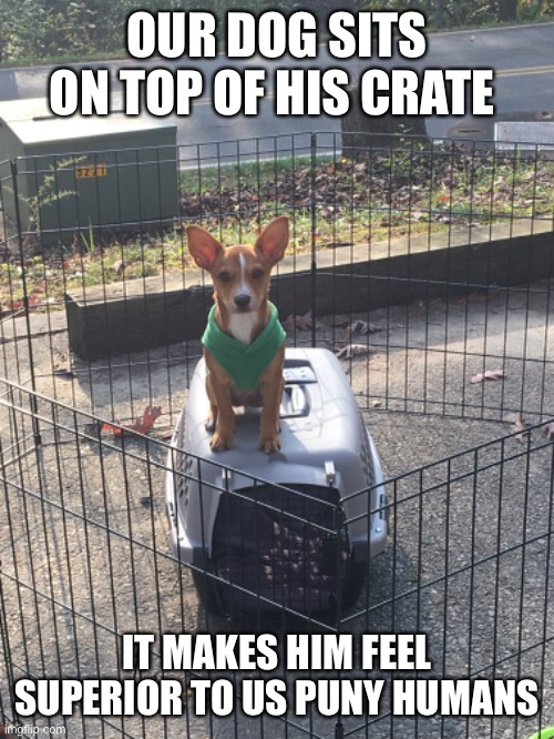 (insert appropriate title here) |  OUR DOG SITS ON TOP OF HIS CRATE; IT MAKES HIM FEEL SUPERIOR TO US PUNY HUMANS | image tagged in cute puppy,cute dog,animals to humans,memes,funny dog | made w/ Imgflip meme maker