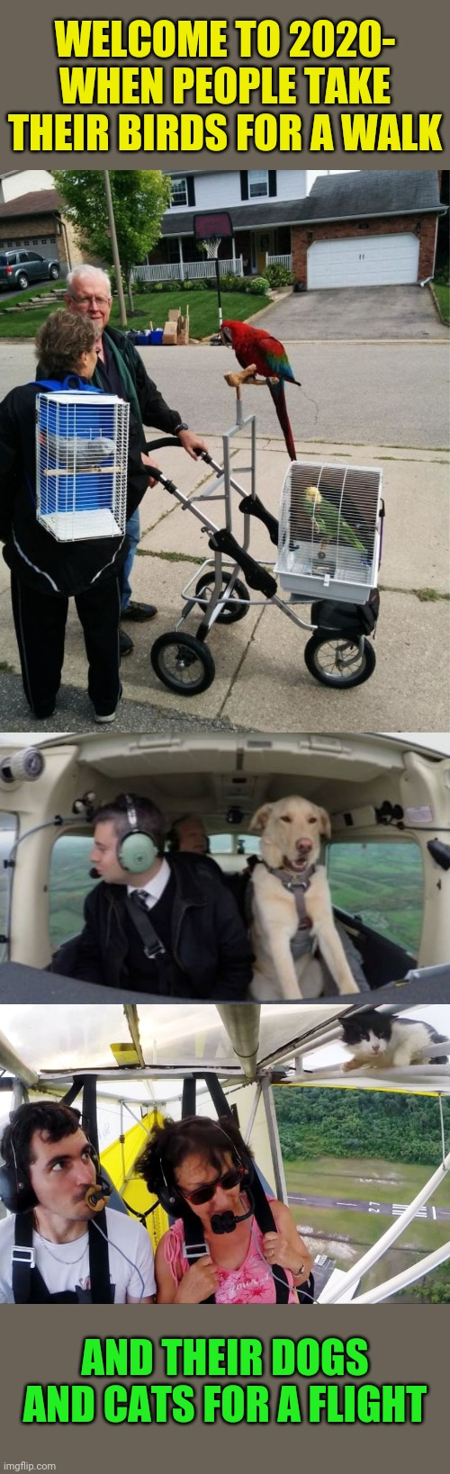 Strange days indeed... |  WELCOME TO 2020- WHEN PEOPLE TAKE THEIR BIRDS FOR A WALK; AND THEIR DOGS AND CATS FOR A FLIGHT | image tagged in 2020,weird stuff,walking,birds,flying,dogs an cats | made w/ Imgflip meme maker