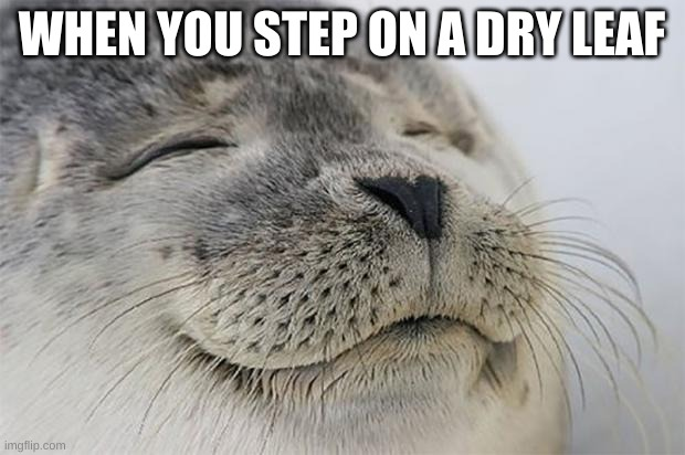 Satisfied Seal |  WHEN YOU STEP ON A DRY LEAF | image tagged in memes,satisfied seal | made w/ Imgflip meme maker