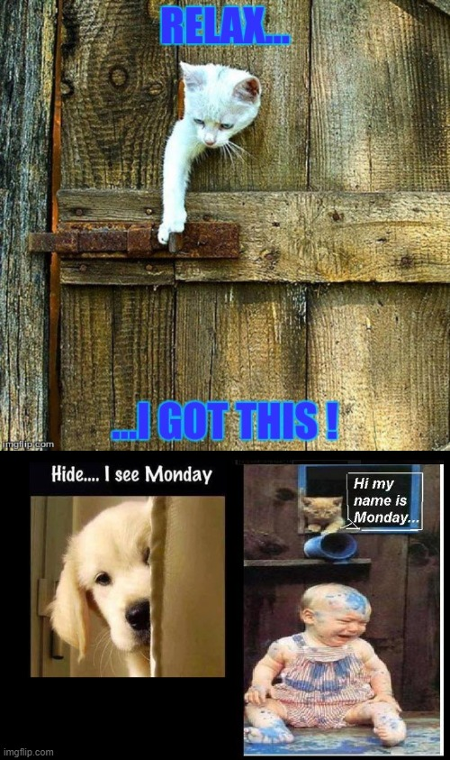 When Mondays escape... | image tagged in pet humor | made w/ Imgflip meme maker