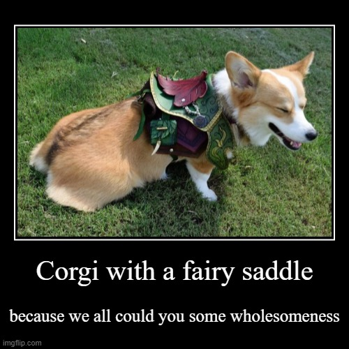 Corgi with a fairy saddle | because we all could you some wholesomeness | image tagged in funny,demotivationals | made w/ Imgflip demotivational maker